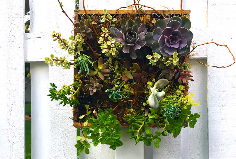 easy succulent garden planters hanging on a fence ​