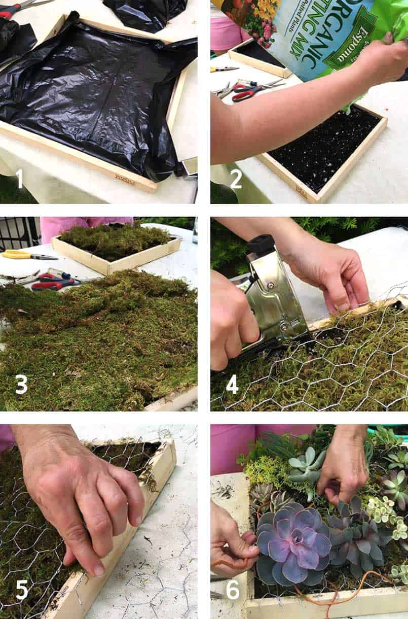 6 steps guide to plant an easy succulent garden planter. Materials include container, cactus soil, heavy duty garbage bags, sheet moss, chicken wire and plant foliage