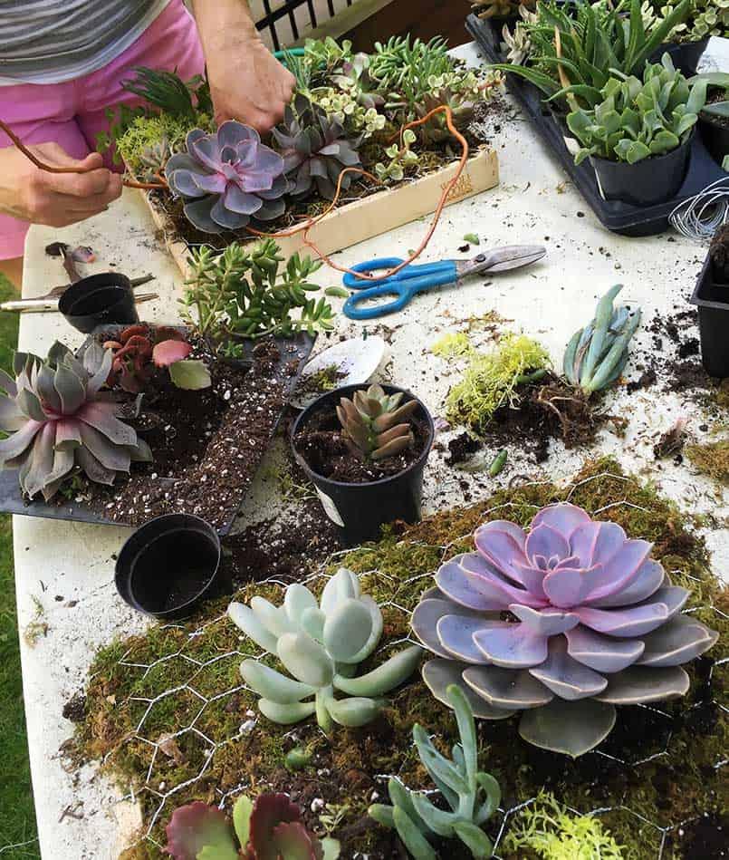 Woman, garden, chicken wire, sheet moss, twigs - Home Depot materials to make an easy succulent garden planter 