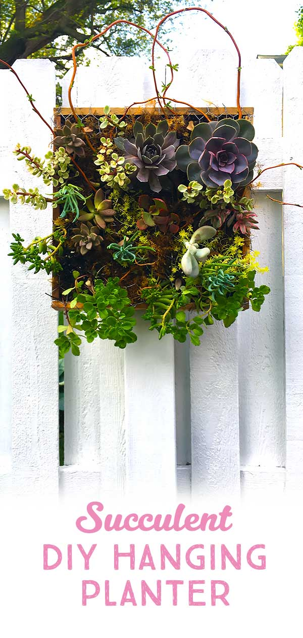 a beautiful DIY easy succulent garden planter hanging on a fence ​