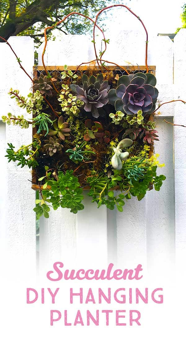 how to make instructions for succulent garden planter hanging on a fence ​