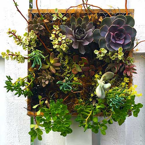 A hanging succulent planter on a white fence