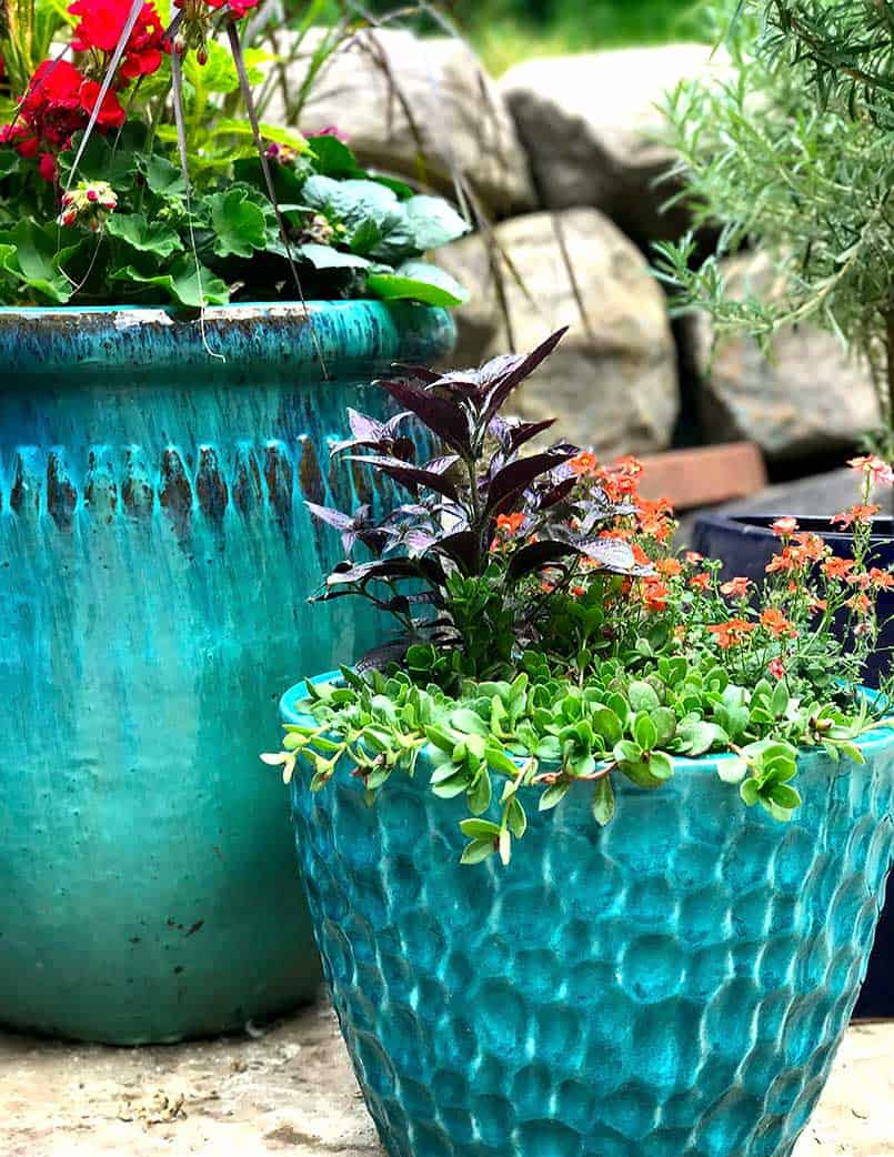 Colorful planted flower pots