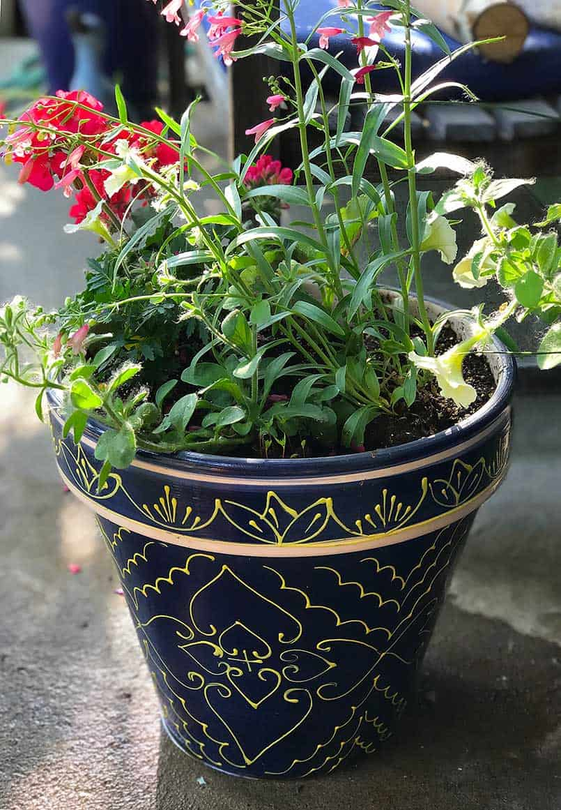 Colorful plant and flowers in ceramic container