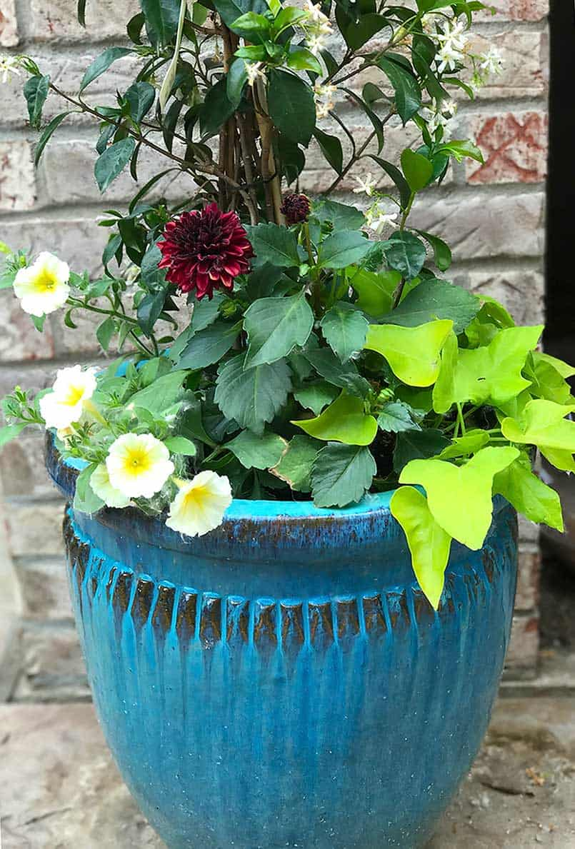 Planted flower ceramic blue container