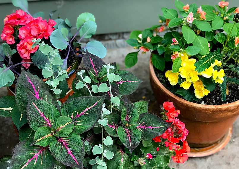 Colorful Spring flower pots planting
