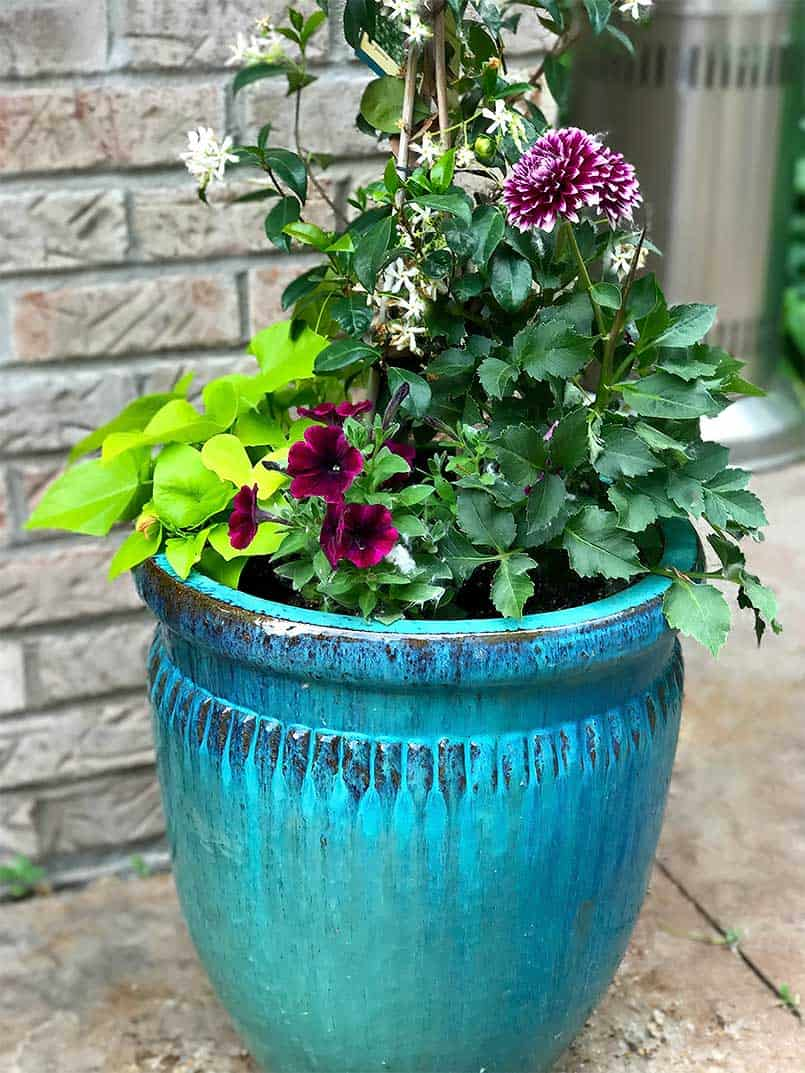Colorful planted flower pots and containers
