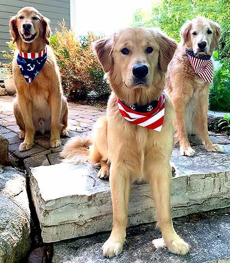 diy-dog-bandana-pet-collar-trio-squad