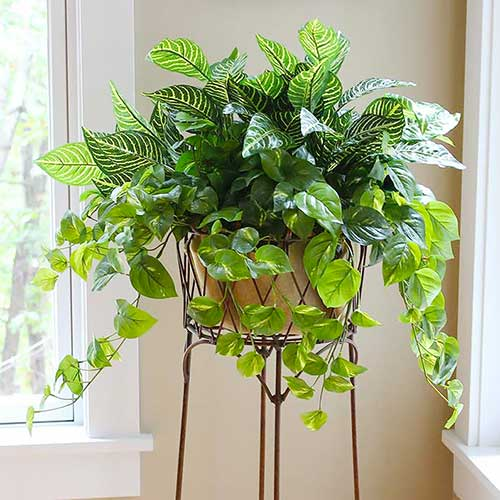An artificial green plant arrangement in an iron plant stand